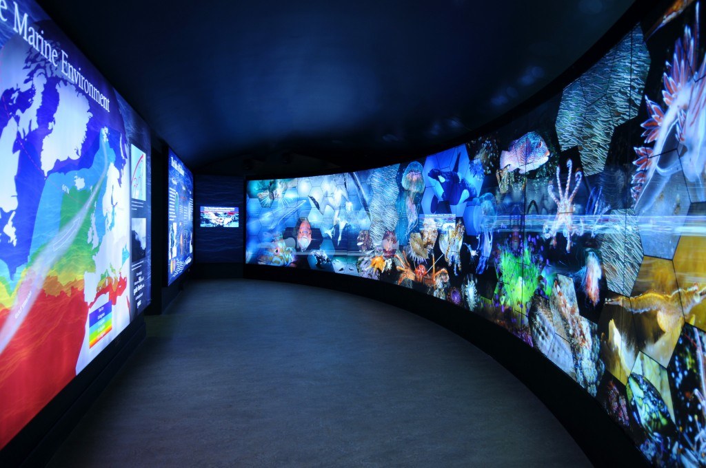 Sumburgh Marine Life Centre - creation of an interactive and immersive visitor envionment